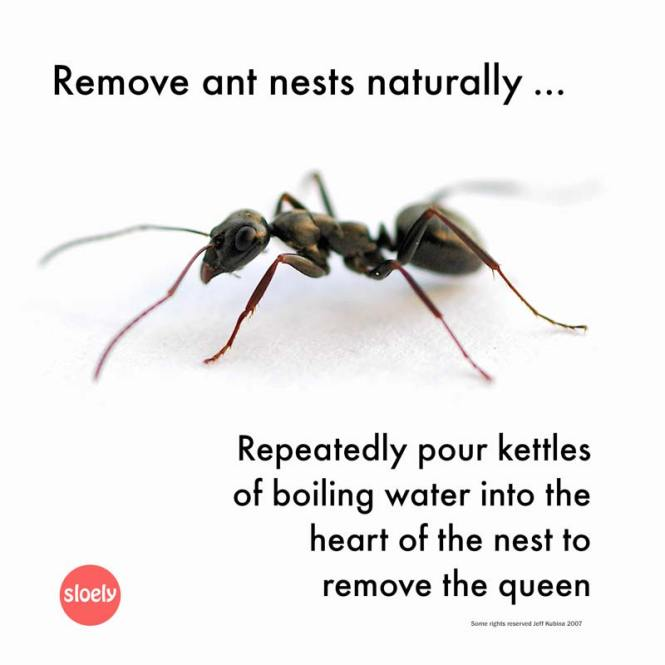 How To Kill Ants Naturally With Only One Ingredient