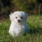 Wild Oneが健康志向の高級犬用おやつを発売開始