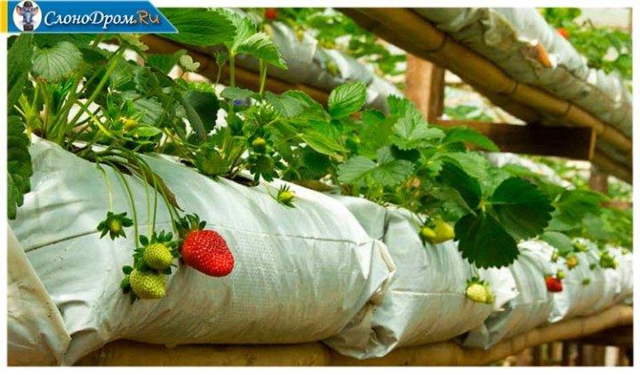 Бизнес - выращиваание клубники в мешках