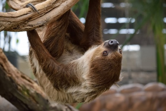 sloth_image