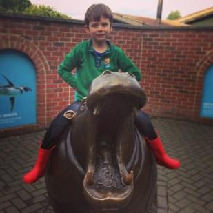 Isaac hippo Marwell Zoo