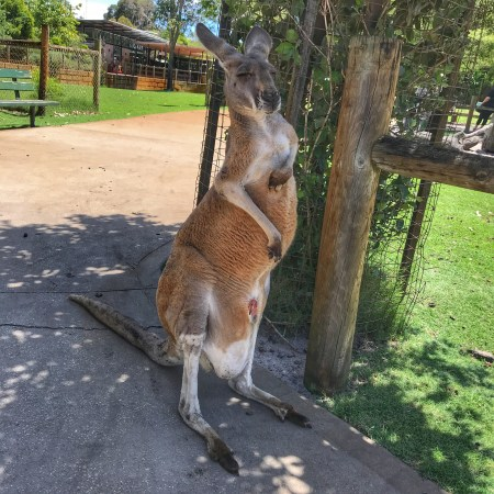 Australia holiday 2018