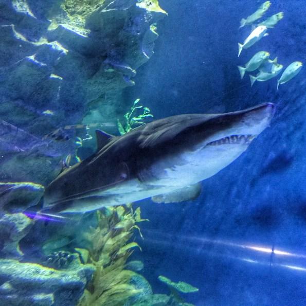 Malaysia 2018 Aquaria KLCC shark