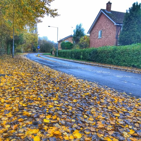 Autumn leaves - my favourite season