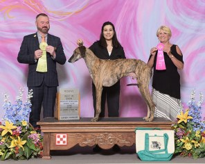 Toby, the first Sloughi to win an AKC NOHS RBIS. Special thanks to judges Jason Hoke and Debra Thornton for recognizing him.