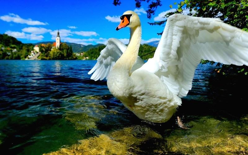 "Slovenia as Europe's first ""boutique destination."""