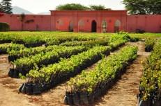Tacama winery