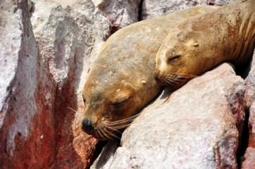 Sea lions <3