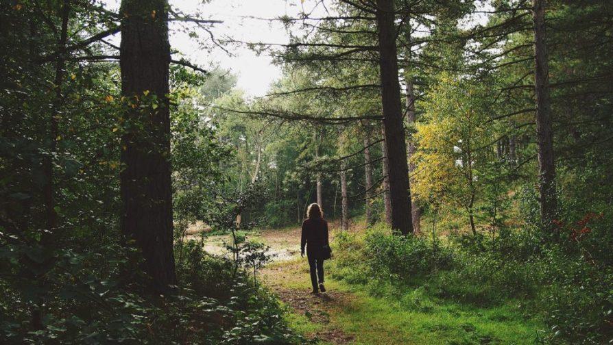 Man Forest Homme Forêt