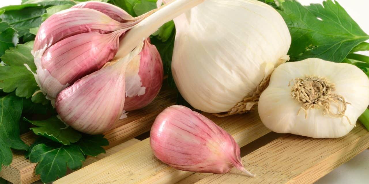 Bildergebnis für Benefits of garlic?
