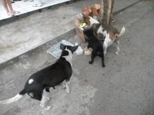 Câini fără stăpân la Tanah Lot. Photo: ©SLOWAHOLIC