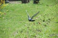 Out of focus, but flying. Cișmigiu Park, Bucharest. Photo: ©Slowaholic
