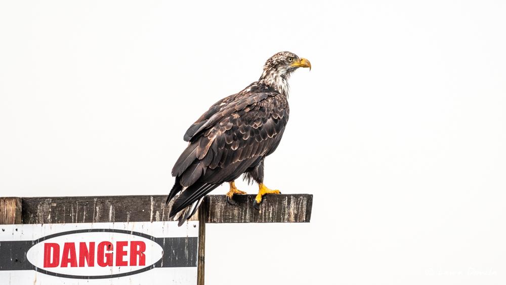 tahsis_eagle-3323