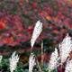 千畳敷カール --千畳敷カールの紅葉--