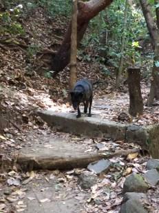 zeb hiking