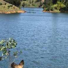 nica looking at the lake