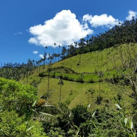 wax palm hills