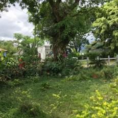 the farm gardens