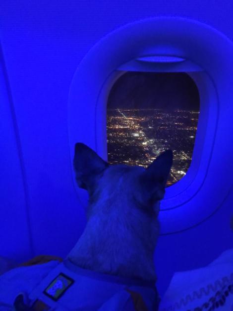 nica blue airplane.JPG