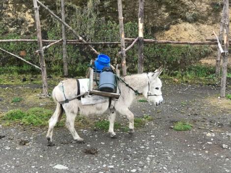 salinas cheese donkey.JPG