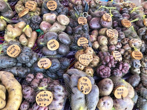 potato varieties with tags and bags.jpg