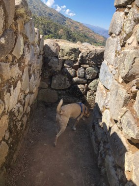 saywite ruins with dog