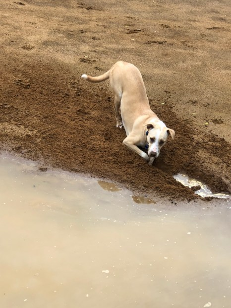 dogs mud management2