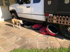 dog beds tires check