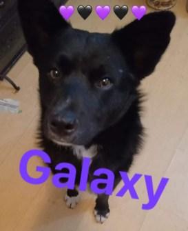 doggalaxy got neutered