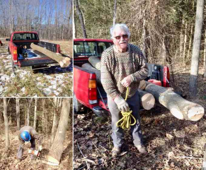 Omar Stoltzfus, tree farmer, cutting Paulownia trees which will be milled into artists canvas stretcher bars