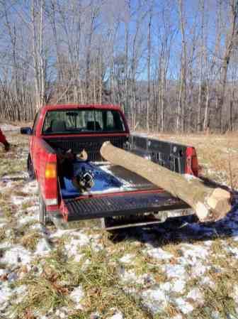 Paulonia log in the truck