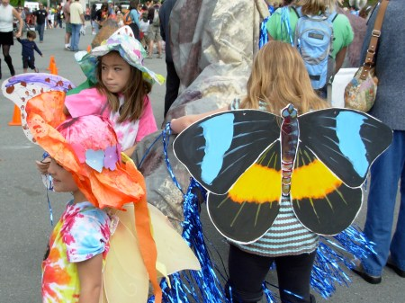 paradebutterfly