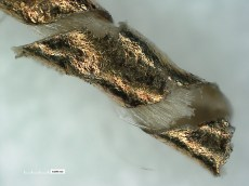 1-Gilt-membrane-thread-3D-Miocroscopy-Smithsonian