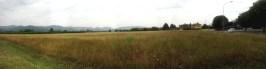 Qui si potrebbero coltivare cereali