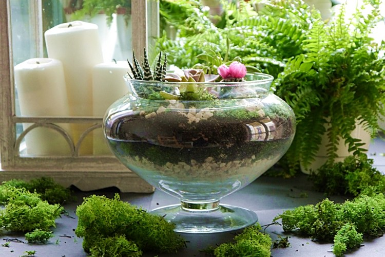 Prezent na parapetówkę, czyli terrarium na sukulenty