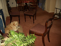 dog with balloon back hardwood dining chair