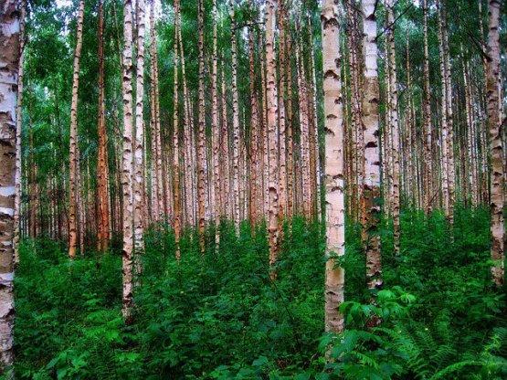 나무 말고는 가진 게 없었던 나라, 핀란드.