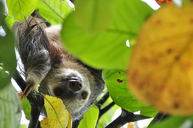 나무늘보는 속도와 힘의 원리가 지배하는 동물계에서도 살아남는다. 느리기 때문에...