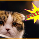 "frustrated cat thinks ""ratz""!"