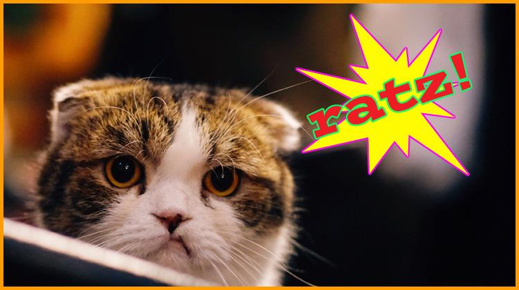 """frustrated cat thinks """"ratz""""!"""