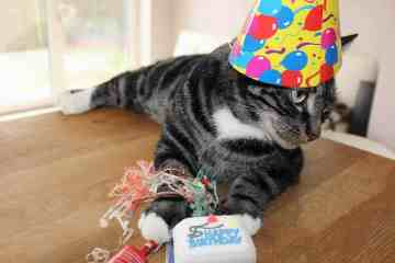 Food Blogging Birthday