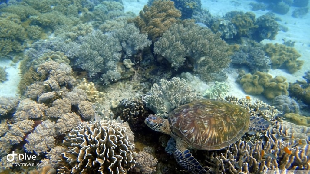Turtle sitting on coral