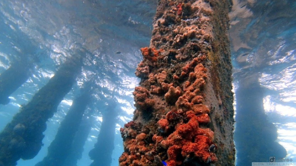 Coral-covered pillar of a pier
