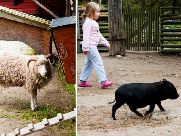 Childrens_farm_in_Kolmarden1