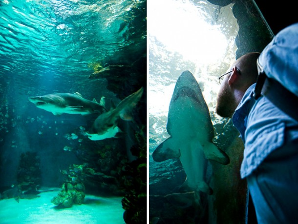 Facing_sharks_in_Aquarium3