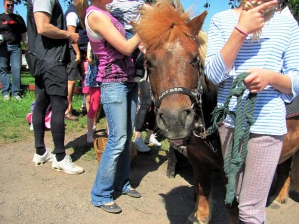 Photo courtesy of Stora Skuggan 4H-Farm