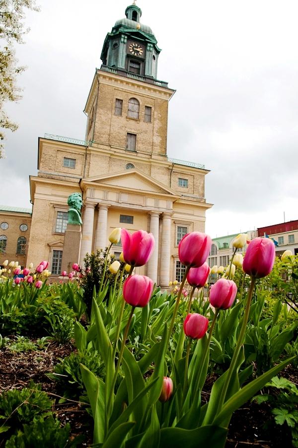 Tulips in Gothenburg by Lola A. Åkerström