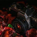 top ideas about photography that are simple to follow - Top Ideas About Photography That Are Simple To Follow!