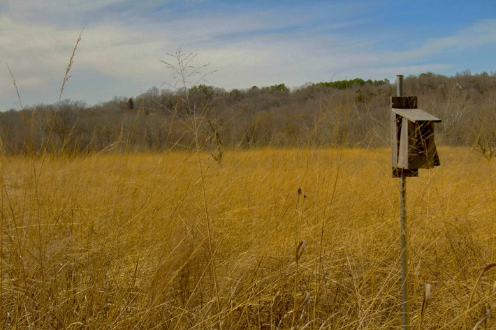 Prairie Preserve - The Parklands of Floyds Fork