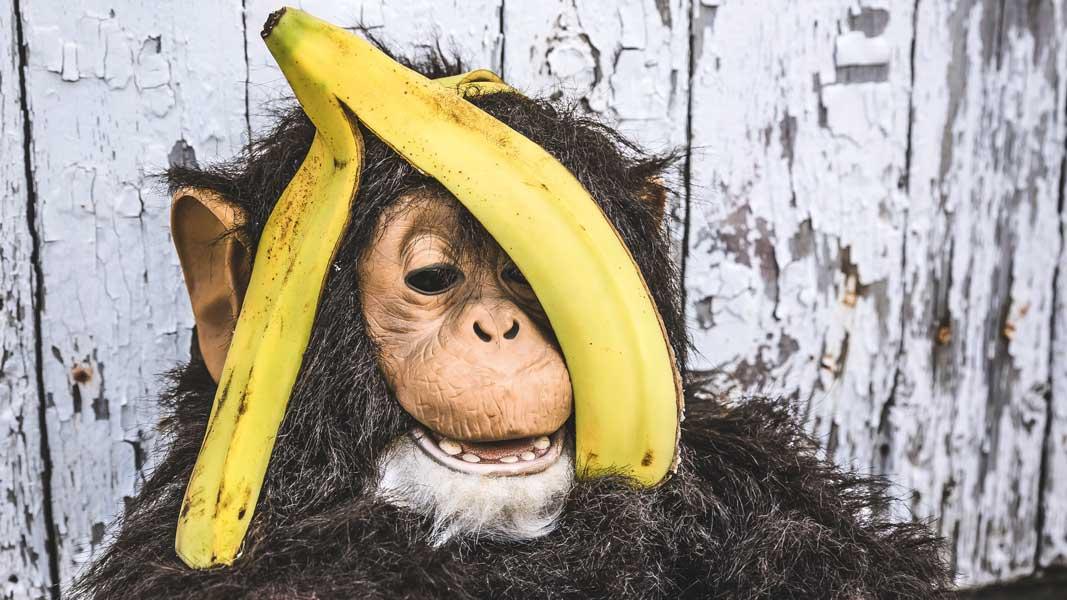 banana monkey be yourself